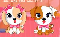 Cute Puppy Daycare information