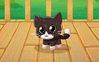 My Pocket Pets Kitty Cat information